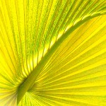 palm-frond-by-margaret-clark