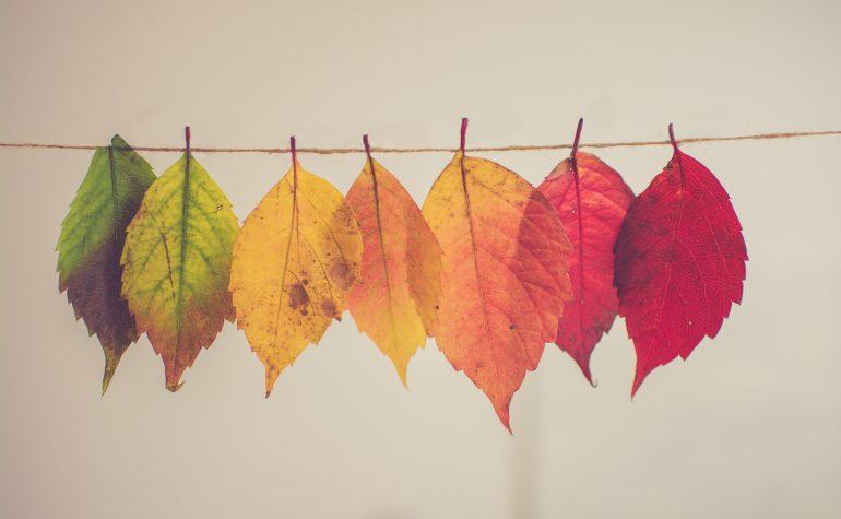 Les 4 saisons et l'importance de la notion de transition dans la formation Karuna